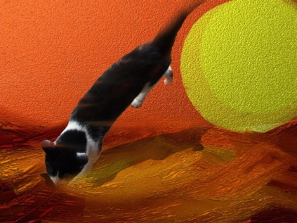 Cat landing on the surgace of a planet
