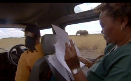 Two African women conservationists monitoring elephants