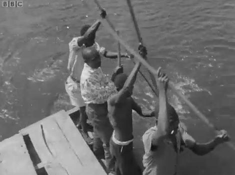 men rowing a boat on the Zambezi (1965)
