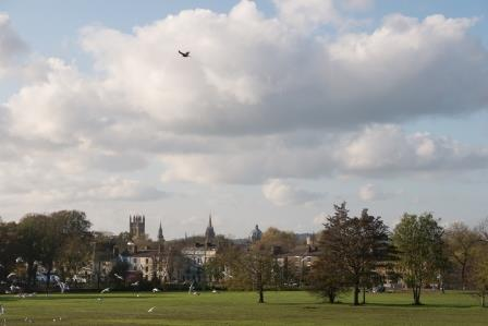 Red kite attacks gull in South Park, Oxford