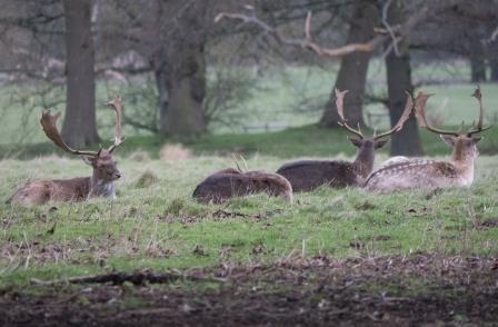 Charlecote Park - Grounds