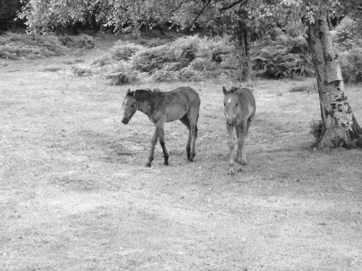 2016 06 28 New Forest Horses 009