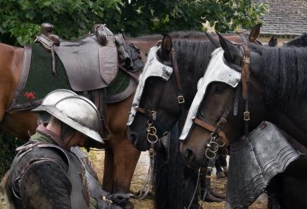 Headshot of horses