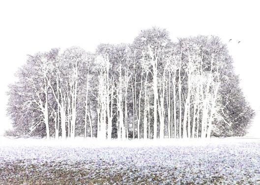 Blenheim Park on a Foggy Day in December