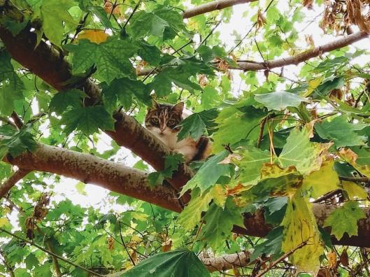 2018 10 25 Real Cats Climb Trees 002.jpg