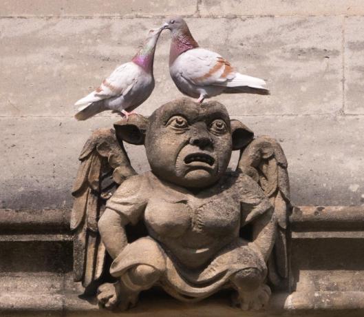 2020 05 12 Pigeons 002